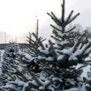 AleChoinki_sezon_wycinkowy (17)