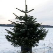 AleChoinki_sezon_wycinkowy (29)