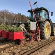Sadzenie choinek na plantacji